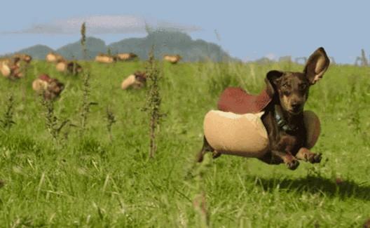 Heinz: Bassets vestidos de cachorro invadem o Super Bowl 50! 2